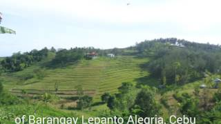 Libo Hills Alegria, Cebu
