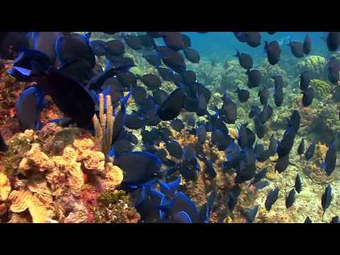Cryopreserving and reviving fish embryos