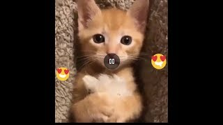TRY NOT TO LAUGH  - NEW Funny Animals and kids Videos  - НОВЫЙ Приколы с Детьми