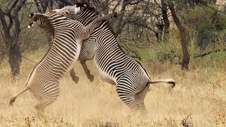 Best of African Animals   Top 5   BBC Earth