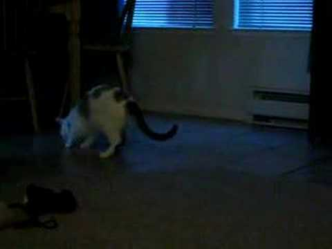 my cat playing fetch 2/3