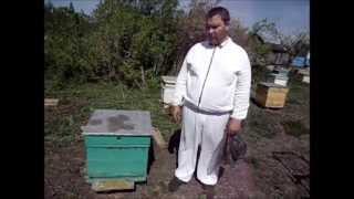 Смотреть онлайн Формирование сборных отводков для пчел