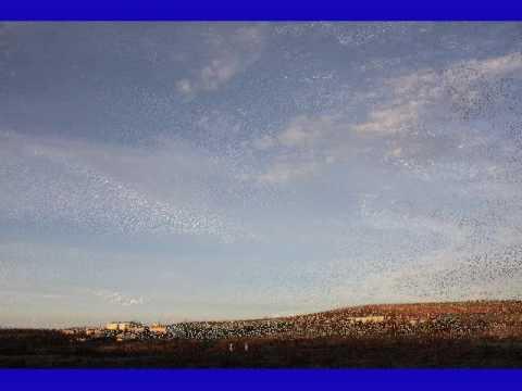Maguilla y sus cielos amaneciendo.wmv