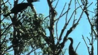 39 - Одиссея Жака Кусто - Дунай