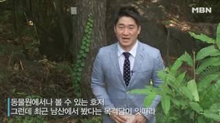 '산미치광이' 아프리카 동물 호저, 남산 출몰?!
