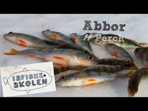 Isfiskeri efter aborrer med balancepirk