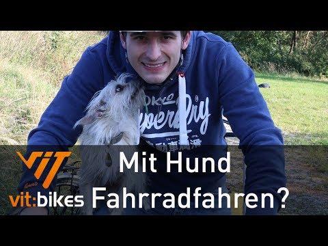 Hundetransport am Fahrrad - vit:bikesTV 200