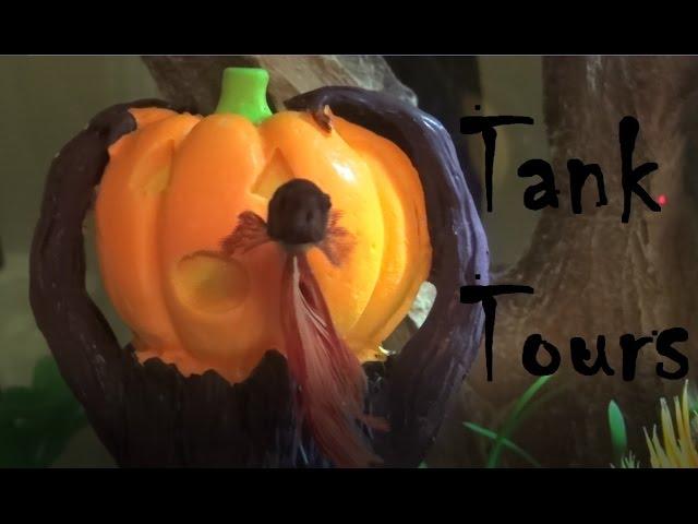 Halloween Betta Tank Tours! | 2016