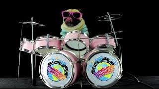 Pet Humor | Funny Animals | Showroom Partners Intro
