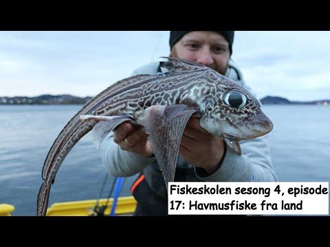 Havmusfiskeri i Norge