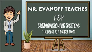 A&P: The Heart is a Double Pump
