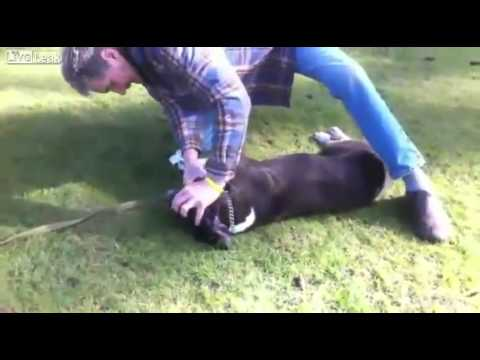 Guy gives CPR to dog and saves the dogs life AMAZING!!