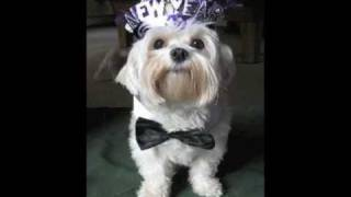 ★Happy New Year! Dogs & Cats Wishing you a Happy New Year!★