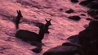 Elk. River. Art.