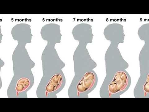 7-й месяц беременности. Развитие малыша.