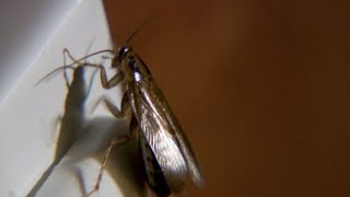 Infestation of Deadly Spiders, Bed Bugs and Roaches   Wildlife Documentary   Natural History