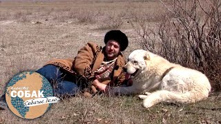 Казахский тобет. Планета собак 🌏 Моя Планета