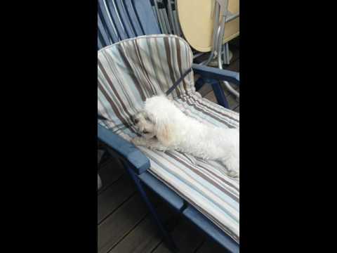 Hund kämpft mit Sesselauflage