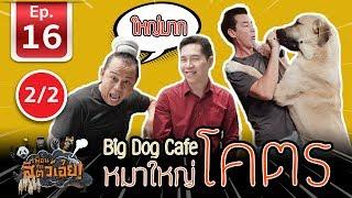 เพื่อนรักสัตว์เอ๊ย - คาเฟ่หมาใหญ่ใจดี [ BigDogCafe ] l EP.16 l 2/2