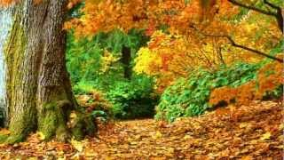 Various Artists - Autumn Leaves (guitar)