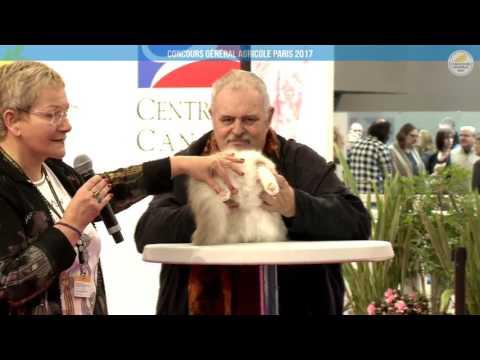 Voir la vidéo : Ring Canins du 27 février 2017, partie 1