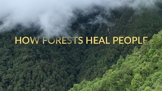 Forest Bathing | Shinrin-Yoku | Healing in Nature | Short Documentary