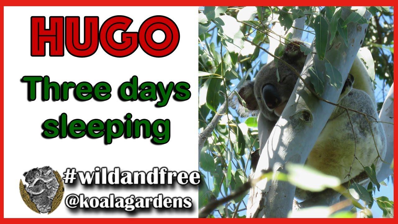 HUGO – three days of sleeping