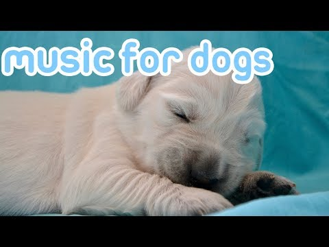How To Calm My Dog With Music! Soothing Sounds For Dogs!