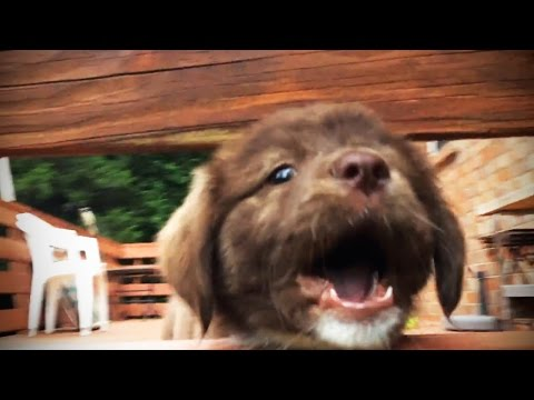 Puppies Howl And Bark For The First Time 🐶💗 [Funny Pets]