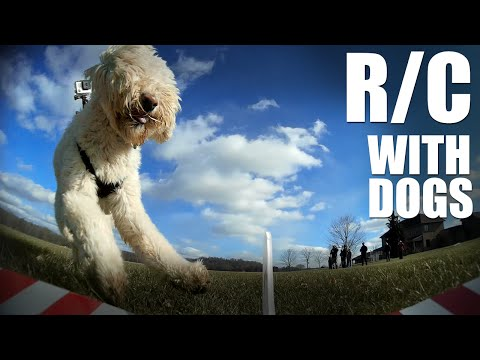 flite-test--rc-with-dogs