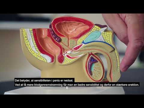 Mi az a prostata