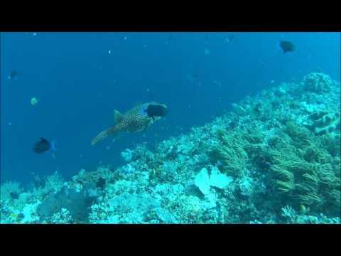 Reef Live