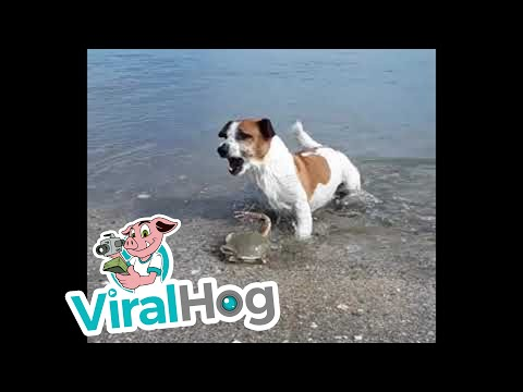 Hund vs. Krebs