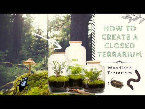 , title : 'How to Create a Closed Native Terrarium   Ecosystem in a Jar