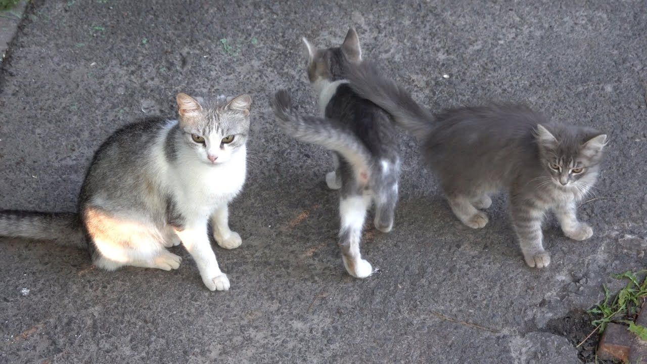 Cat asks for food for kittens