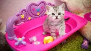 Тайная жизнь домашних животных .Three kitten and mother play