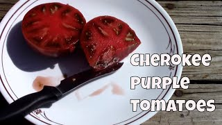 Cherokee Purple Heirloom Tomatoes From Seed To Taste Test.