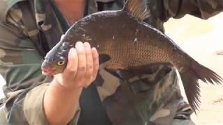 Рыбалка озеро бросно в тверской области