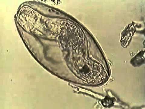 Какие бывают паразиты название