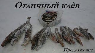 Отчеты о рыбалке в подмосковье за сегодня