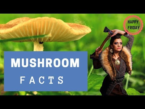 , title : 'Amazing Mushroom Facts!