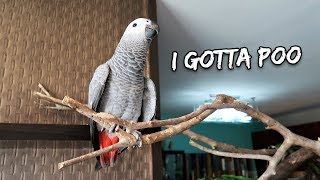 My Bird is Finally Potty-Trained   Vlog #282