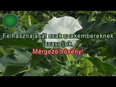 Gyógynövényes paraziták