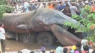 Смотреть онлайн Документальный ролик про морского монстра