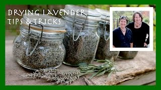 How to Dry Lavender Tip (Plus the most interesting use for dried lavender)
