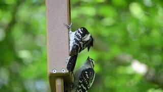 """DISC 186 - """"Wild Birds Unlimited"""", Blasdell, NY"""
