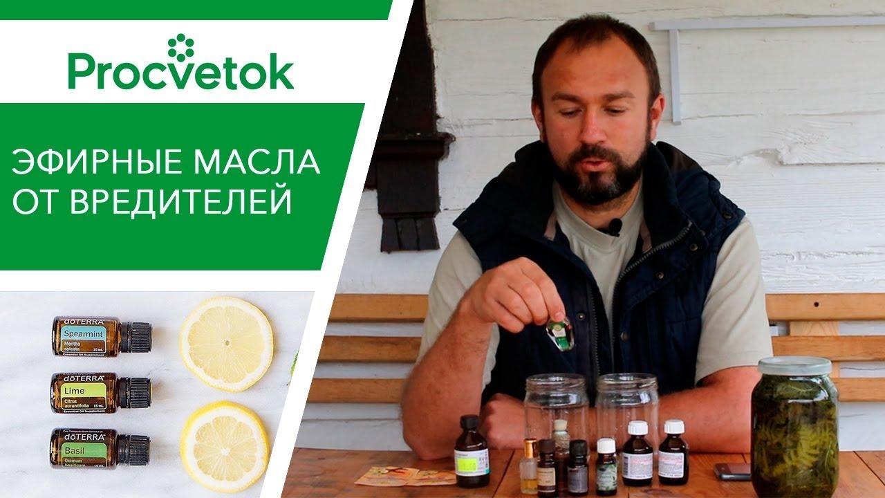 Эфирные масла от вредителей. Приготовление усиленного раствора для опрыскивания томатов и огурцов.
