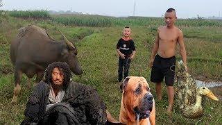 Vịt Nướng Càn Khôn Cái Bang - Món Ăn Huyền Thoại Dành Cho Chó ( Dog food )