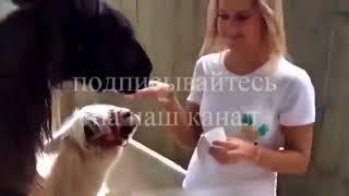 видео приколы ржачные 2018 #81 самое смешное видео 2018
