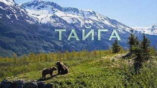 Тайга - песня для детей - клип - Лансере  / Taiga - song for children